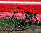 Bici e Tulipani: l'Olanda in primavera