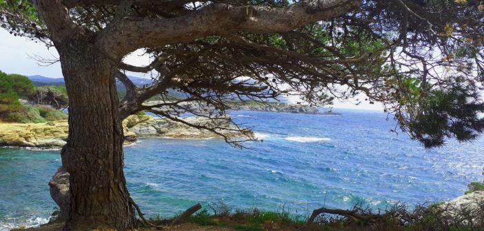 Portfolio. Il mare e le isole di Provenza