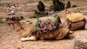 Marrakech - Campo Tendato La Pause