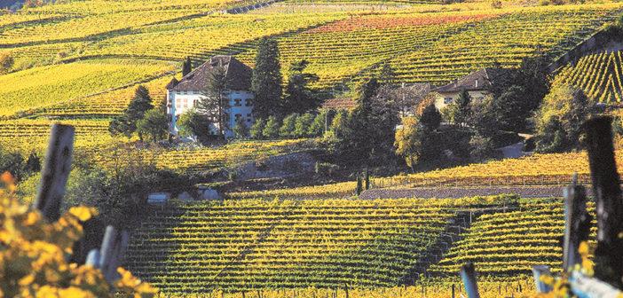 Spumeggianti vacanze in Alto Adige tra vigneti 'bianchi e rossi'