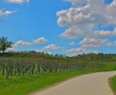 A spasso tra vini, sapori e cultura del Collio. Da Cividale del Friuli a Dolegna del Collio